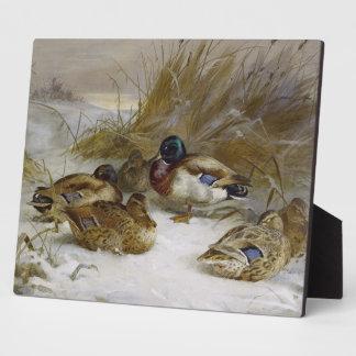 Pato silvestre placas