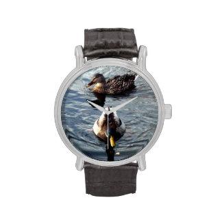 Pato silvestre (platyrhynchos de las anecdotarios) reloj de mano