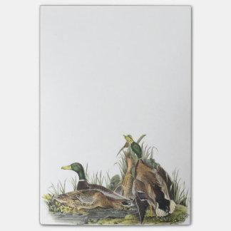 Pato silvestre por Audubon Post-it® Notas