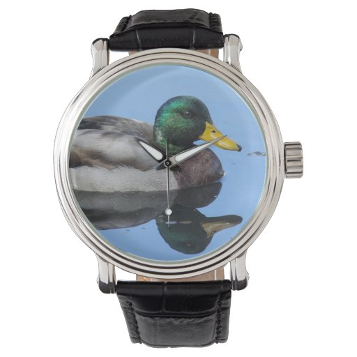 Pato silvestre relojes