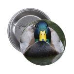 Pato silvestre, varón pin