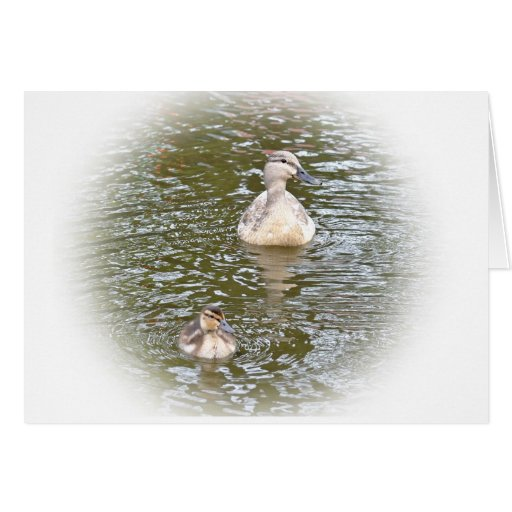 Pato silvestre y anadón tarjeton