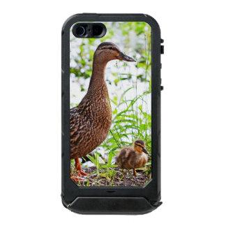 Pato silvestre y anadones de Shirley Taylor Carcasa De Iphone 5 Incipio Atlas Id