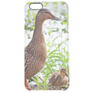 Pato silvestre y anadones de Shirley Taylor Funda Clearly™ Deflector Para iPhone 6 Plus De Unc