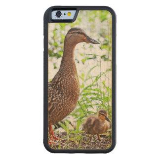 Pato silvestre y anadones de Shirley Taylor Funda De iPhone 6 Bumper Arce