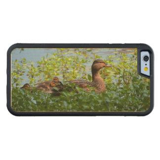 Pato silvestre y anadones funda de iPhone 6 bumper arce