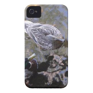 Pato (varón y hembra) Case-Mate iPhone 4 carcasas