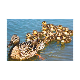 Pato y anadones del pato silvestre de Momma Lona Envuelta Para Galerias