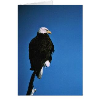 Patoga River National Wildlife Refuge Bald Eagle Greeting Card