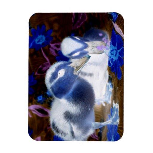 Patos azules y blancos fantasmagóricos del bebé imanes rectangulares