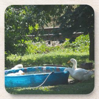 Patos blancos y un práctico de costa del corcho de posavasos