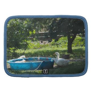 Patos blancos y una piscina organizador