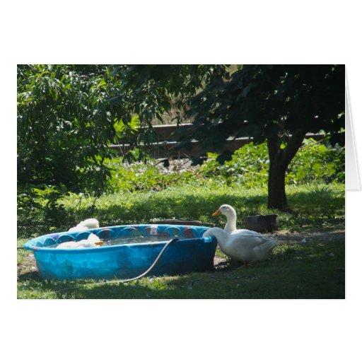 Patos blancos y una tarjeta de la piscina