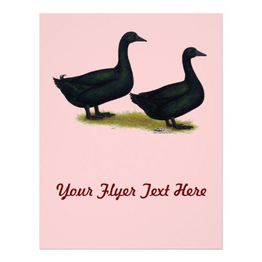 Patos:  Cayugas negros Flyer Personalizado