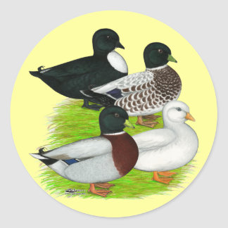 Patos:  Cuarteto de la llamada Pegatina Redonda