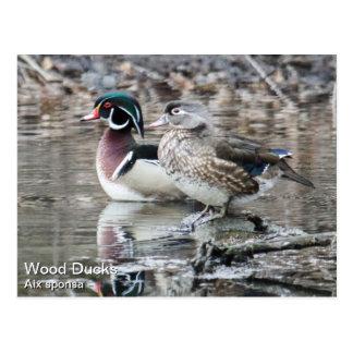 Patos de madera tarjeta postal