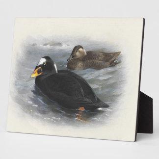 Patos de mar placas de plastico