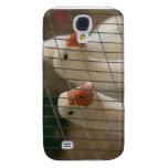 Patos de Pekin en imagen de la jaula