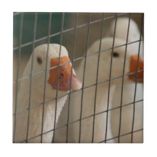 Patos de Pekin en imagen de la jaula Azulejo Cuadrado Pequeño