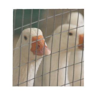 Patos de Pekin en imagen de la jaula Libreta Para Notas