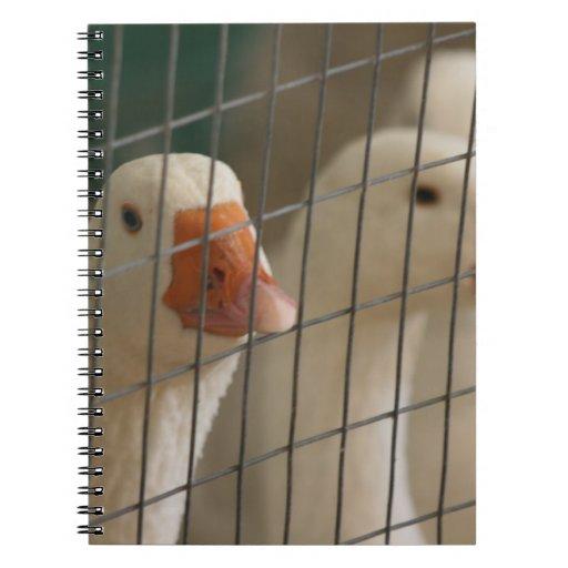 Patos de Pekin en imagen de la jaula Libro De Apuntes Con Espiral