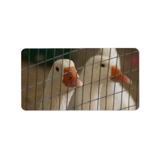 Patos de Pekin en imagen de la jaula Etiquetas De Dirección