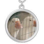 Patos de Pekin en imagen de la jaula Pendiente