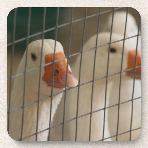 Patos de Pekin en imagen de la jaula Posavasos De Bebida