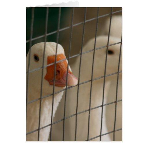 Patos de Pekin en imagen de la jaula Tarjeta De Felicitación