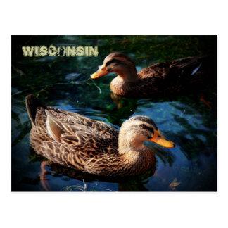 Patos de Wisconsin Postales