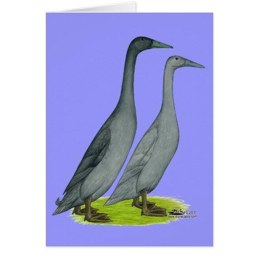 Patos del corredor azul felicitacion