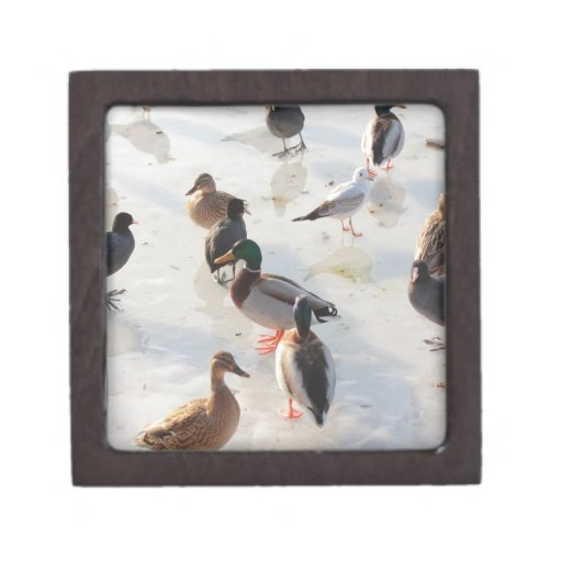 patos del hielo caja de regalo de calidad