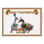 Patos del indio de la acción de gracias tarjeta de felicitación