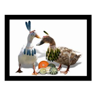 Patos del indio de la acción de gracias postal