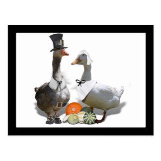 Patos del peregrino de la acción de gracias postal