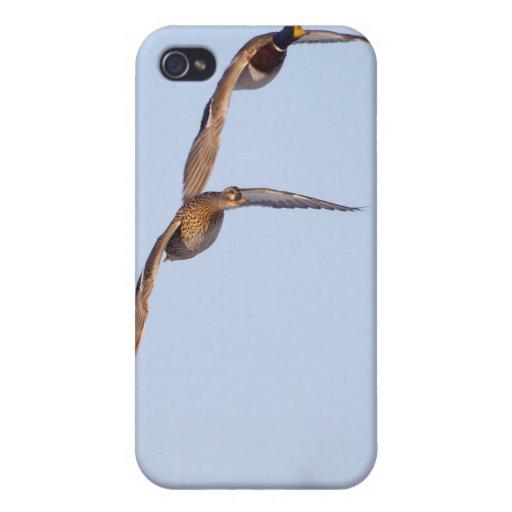 Patos del vuelo iPhone 4/4S carcasa
