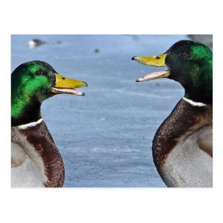 Patos divertidos postales