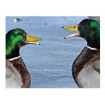 Patos divertidos tarjeta postal