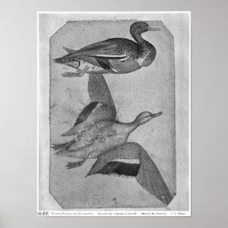 Patos, el álbum de Vallardi Póster