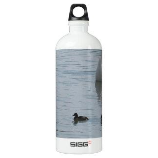 Patos en agua