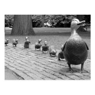 Patos en el jardín público - Boston Postales