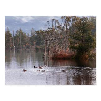 Patos en el lago empire tarjetas postales