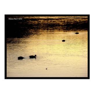 Patos en el lago en la postal de la foto de la pue