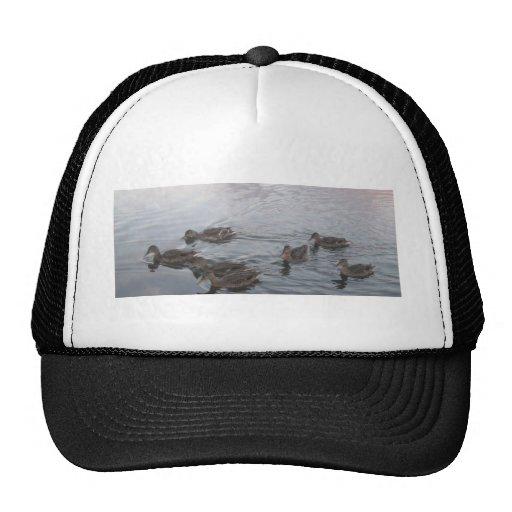 Patos en el lago gorros bordados