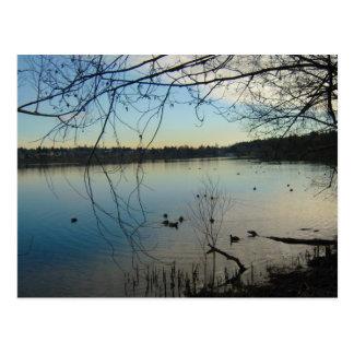 Patos en el lago tarjetas postales