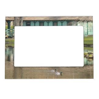 Patos en el marco del imán de la foto de la charca foto de imanes