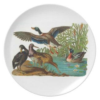 Patos en la placa de la charca plato de cena