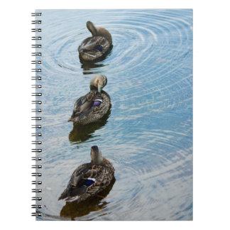Patos en un cuaderno de la fila
