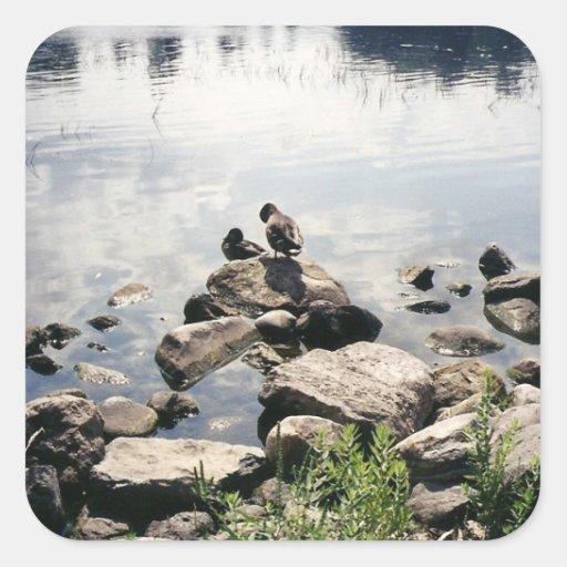 patos en un río pegatina cuadrada