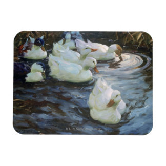Patos en una charca imán
